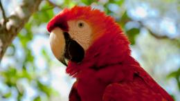 Impressionen 23-Tage-Amazonasreise Bild 1 (260 × 146)